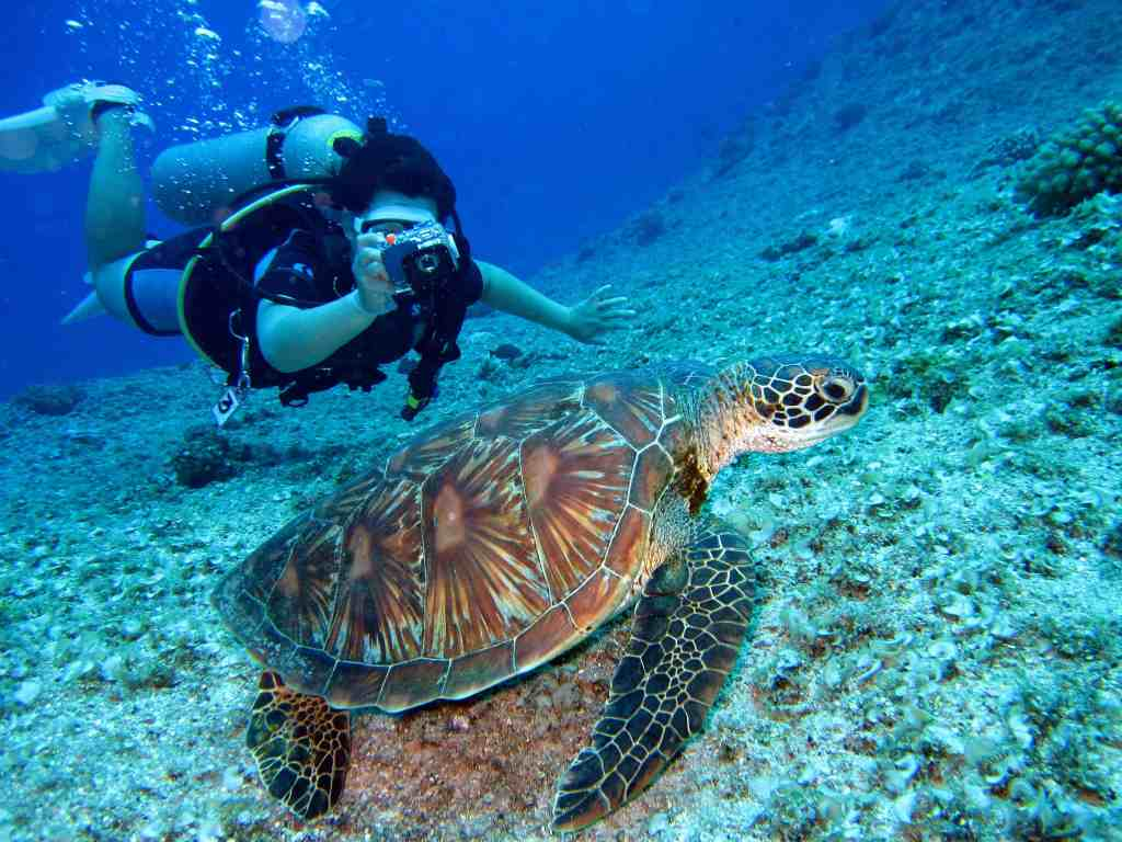 virtual travel experiences at the great barrier reef