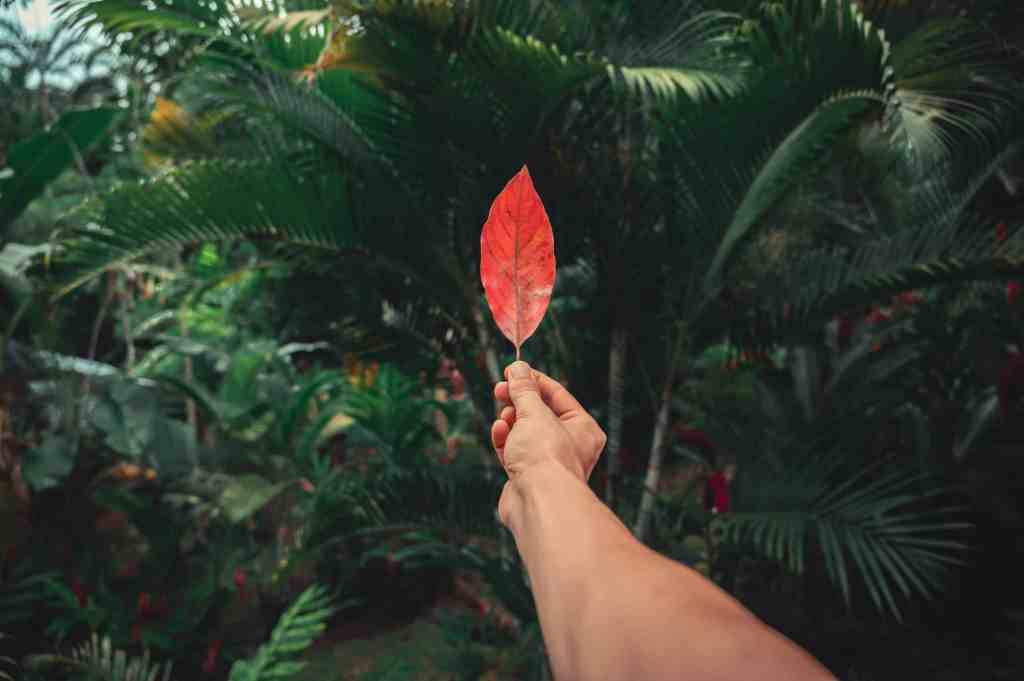 what is ecotourism? Man holding a red leaf