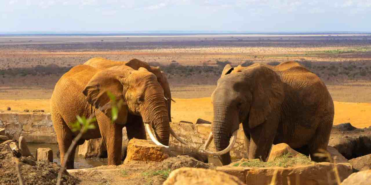 15 Best Ethical Animal Experiences Around the World