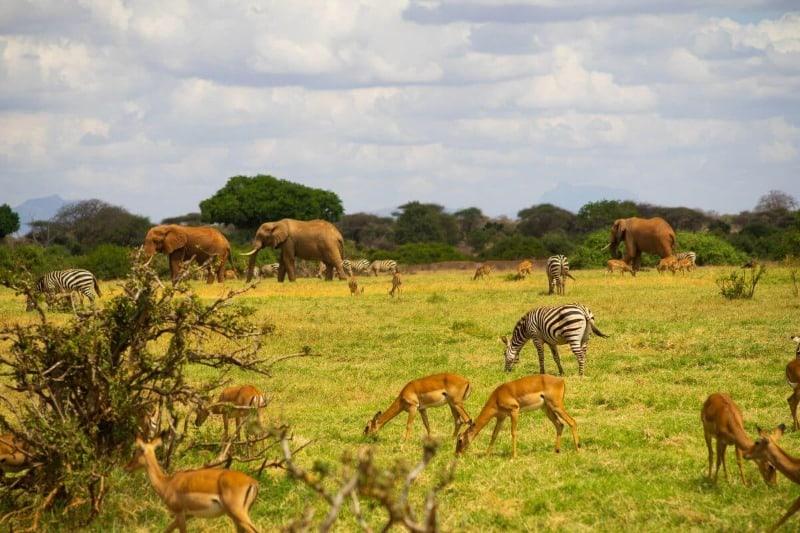 Safari in Tsavo National Park