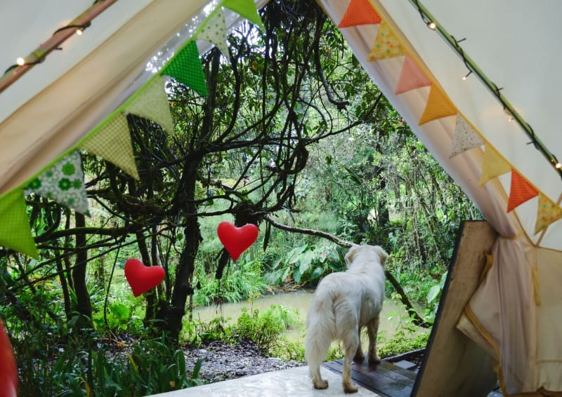 Open tent with the back of a dog looking out. Bunting, garlands and lights are all essential for glamping in the garden