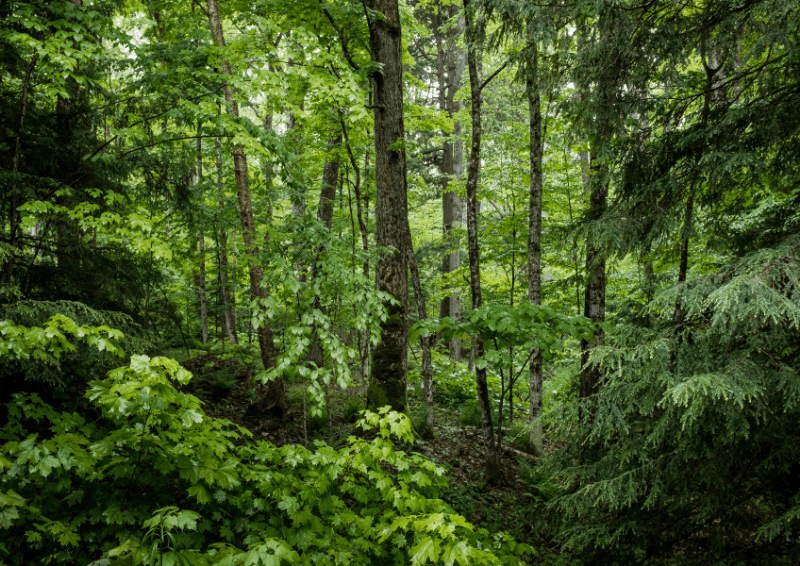 Forest bathing therapy is the art of connecting with nature among the trees.
