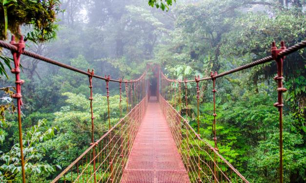 9 Amazing Ecotourism Activities To Do Around The World