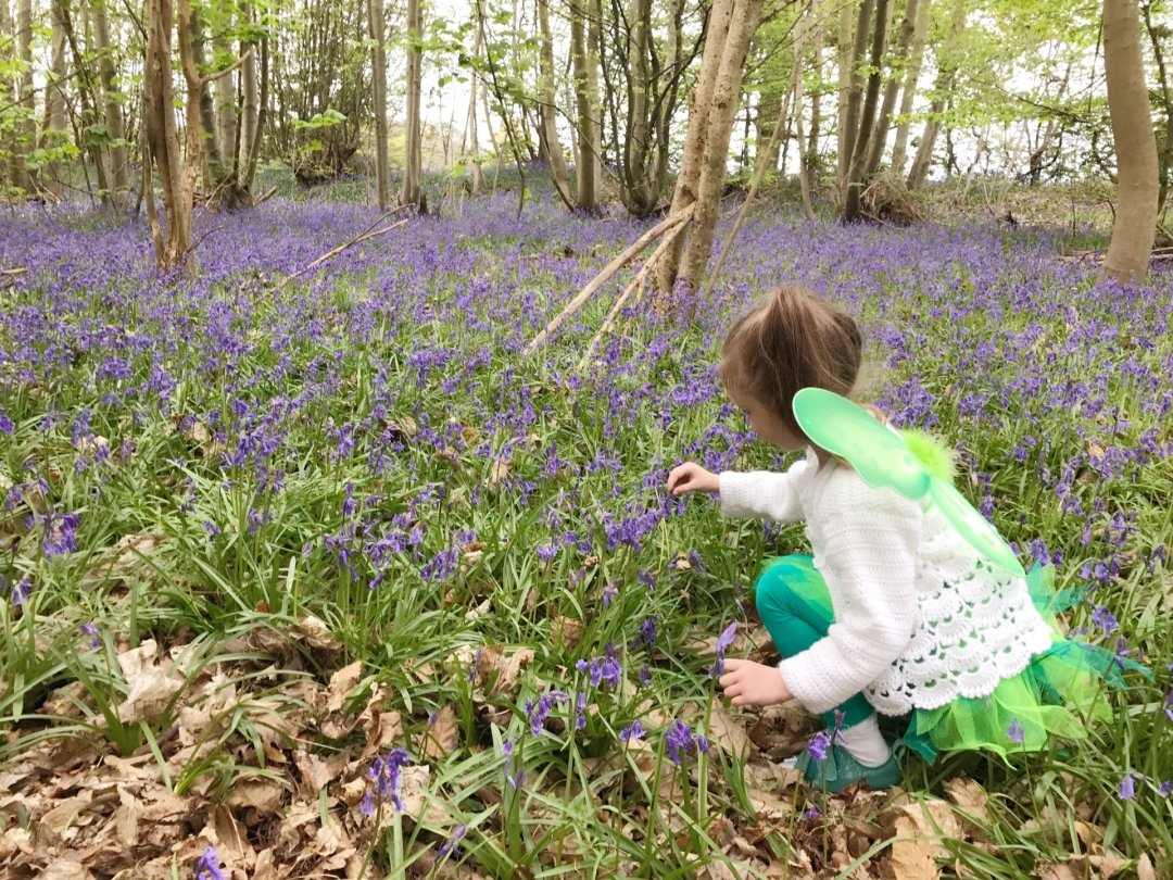 My Sunday Photo Bluebell Wood