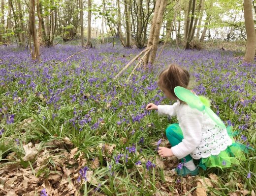 My Sunday Photo - Bluebell Wood