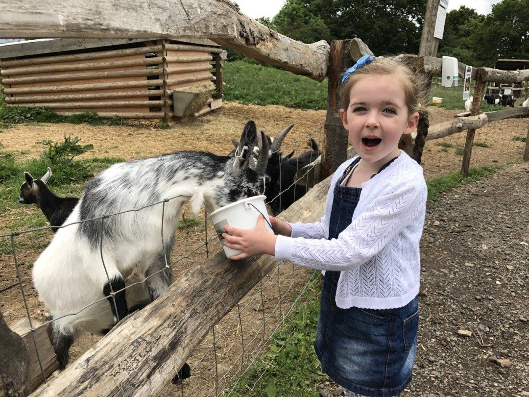 Farms in Essex - White Elm Petting Farm feeding animals