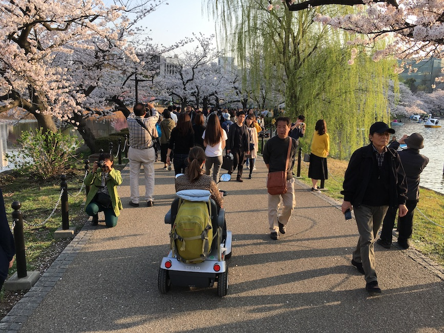 Cruising through Ueno Park on a mobility scooter