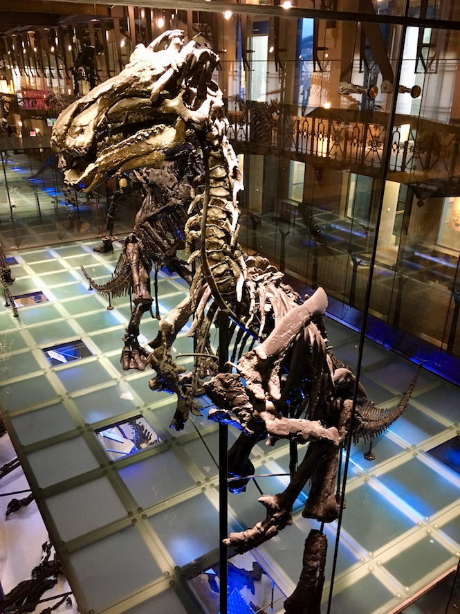 Iguanodon skeleton at the Museum of Natural Sciences in Brussels | Little Miss Turtle | Accessible Travel Blog