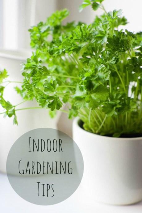 Indoor Gardening Tips  |  Vintage Scrap Shop