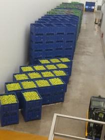 Les caisses de pommes