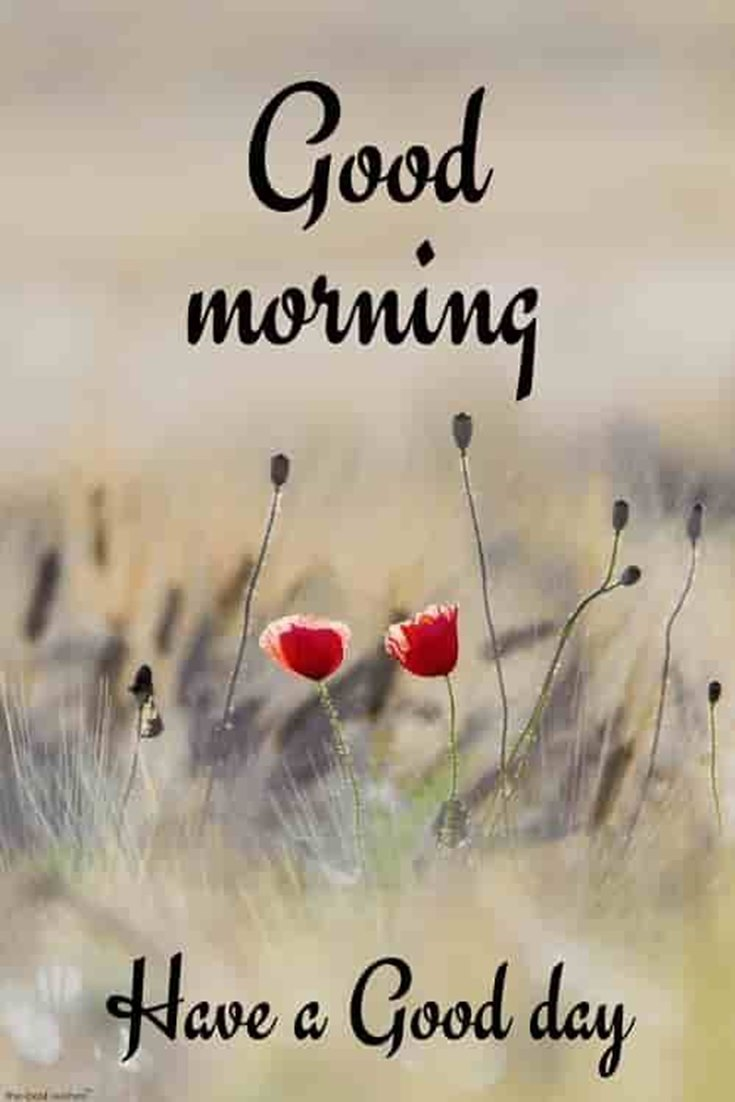 28 Amazing Good Morning Quotes and Wishes with Beautiful Images 26