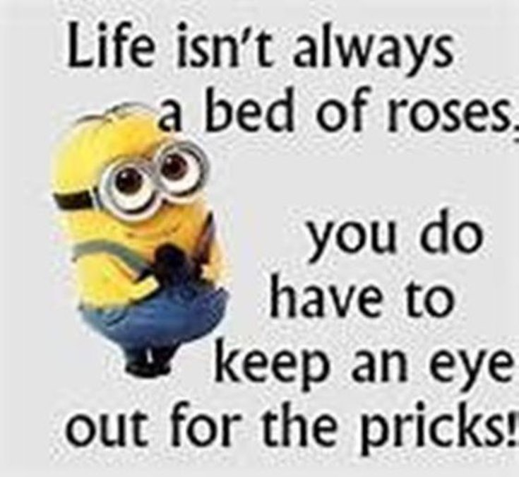 55 Funny Minion Quotes You Need to Read 18