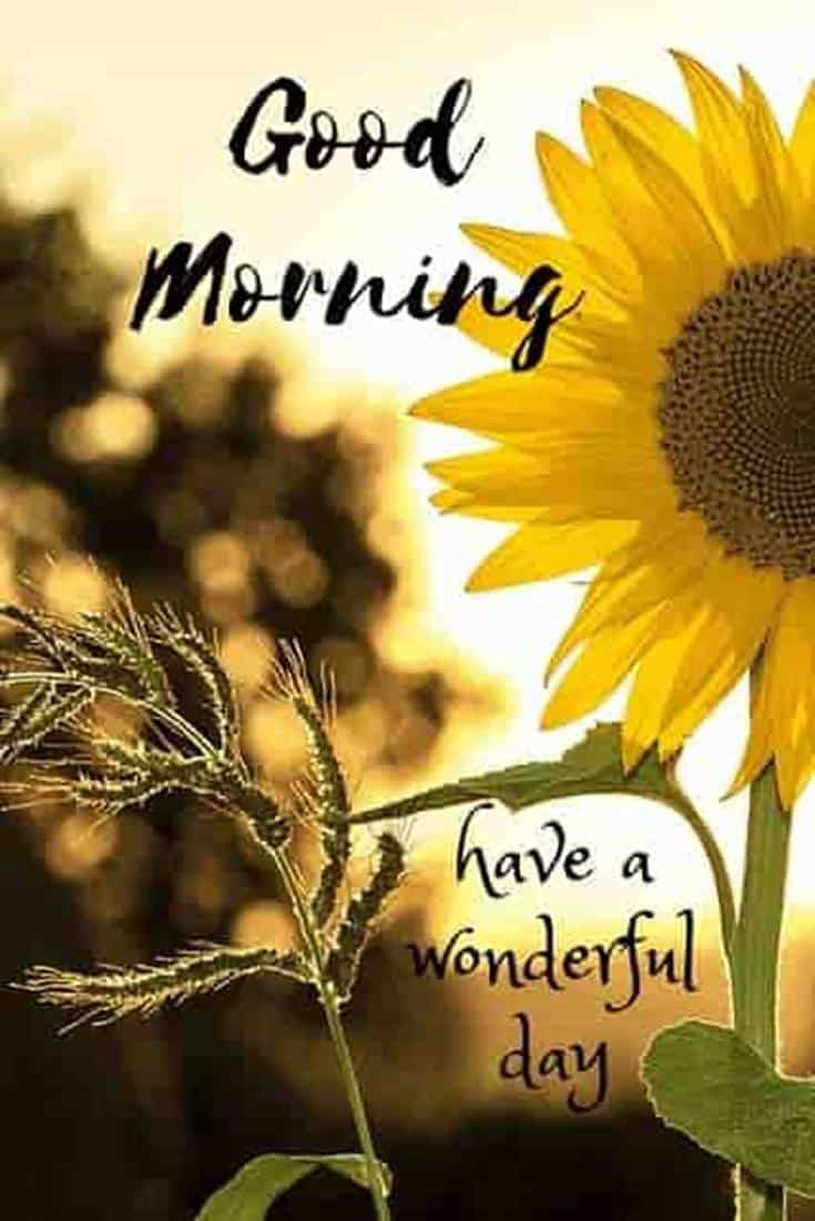 35 Amazing Good Morning Quotes and Wishes with Beautiful Images 11 #flowers #flower