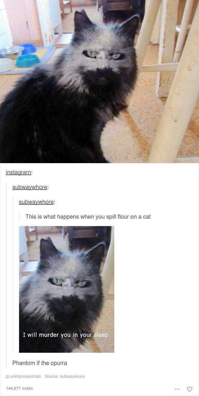 35 Hilarious Memes To Make You Laugh 20