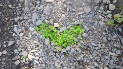 Left an obscure heart in the trail. The person that needs it will see it. Attempting to pay the good energy forward.