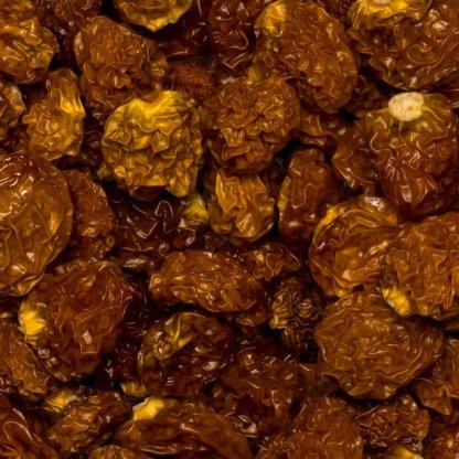Close up golden inca berries.