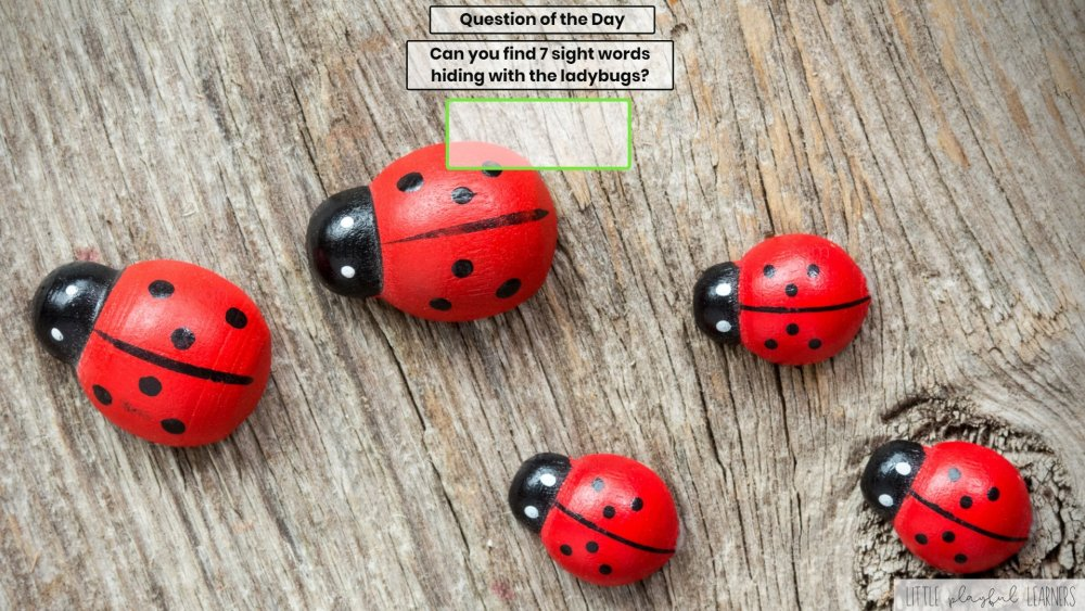 Seesaw: Sight word hunt - insect theme