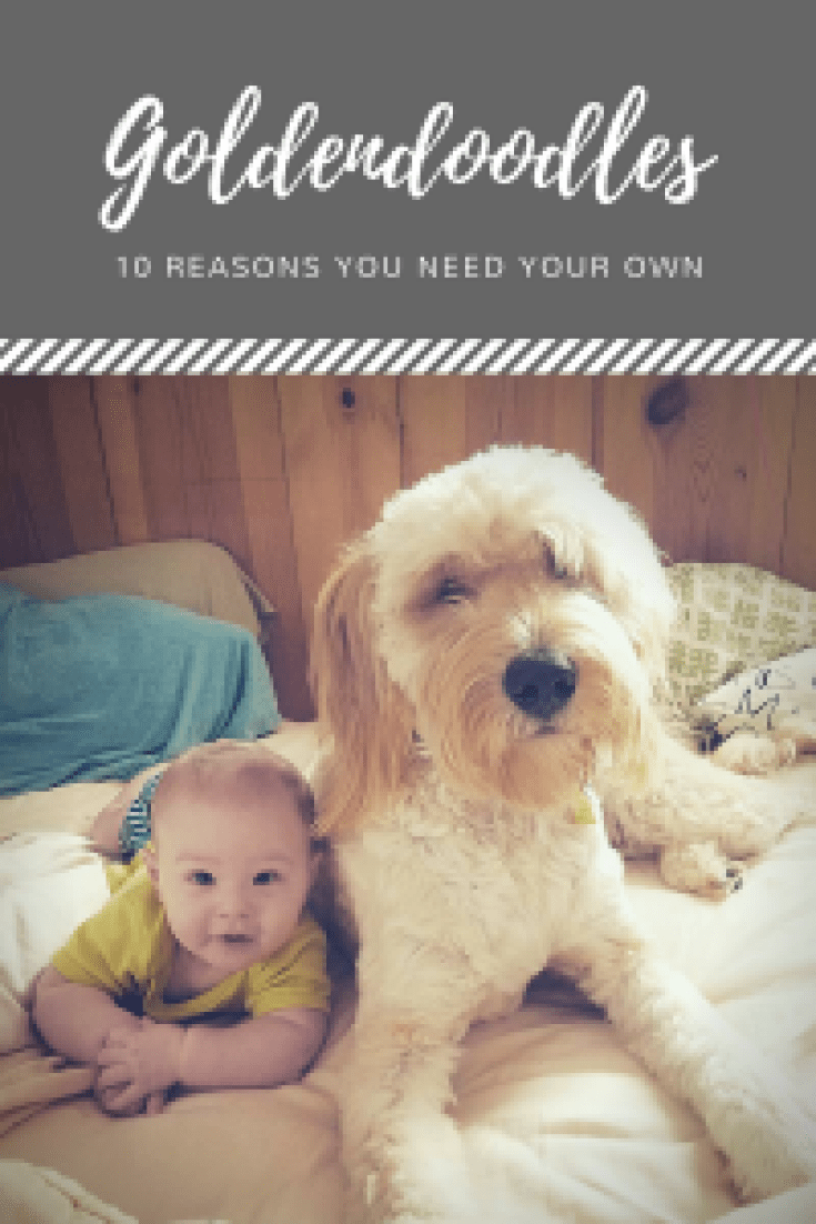 What dog breed works best for your family?