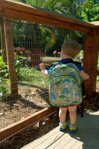 flamingos and backpack