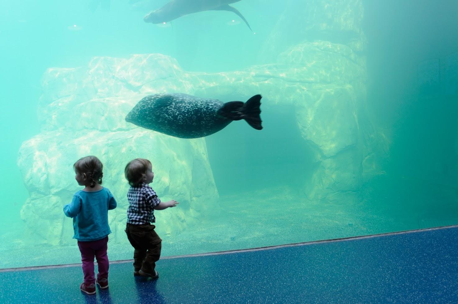 sea lions riverbanks zoo
