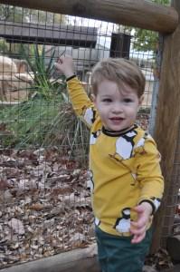 modern rascals-puffins-puffin shirt-zoo trip