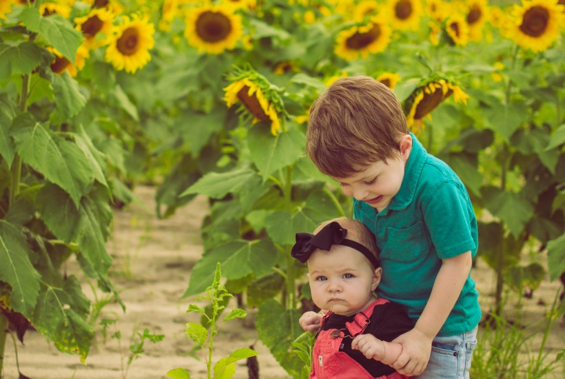 sunflower field photos