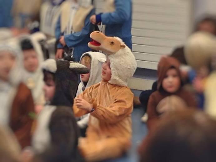 My Cute Camel Conor.x