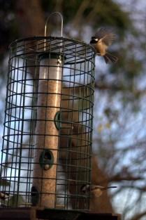 At the George C. Reifel Migratory Bird Sanctuary in Delta, BC, Canada.