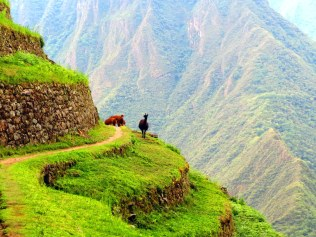 First sighing of a llama on the Inca Trail.