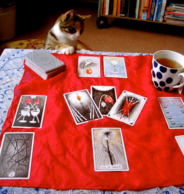 New year tarot spread with cat looking on