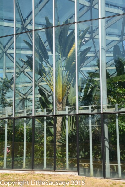 The glasshouse is full of orchids and other exotic plants.
