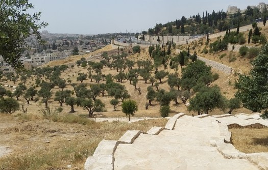 Path descending into Kidron Valley through the olive trees