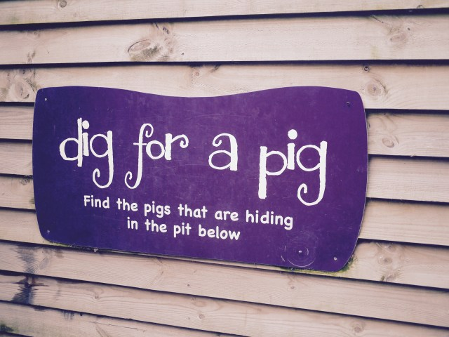 the pigs edgefield norfolk