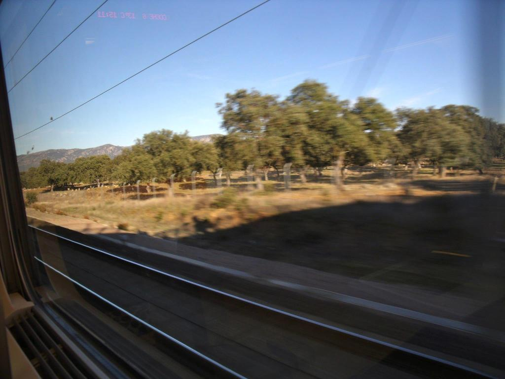 olive trees from the train in Spain