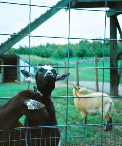Eckerts Country Farm film photography