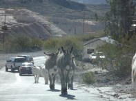 And more burros...