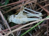 Did the grasshopper molt and leave this behind? Or was it eaten by a very tidy predator?