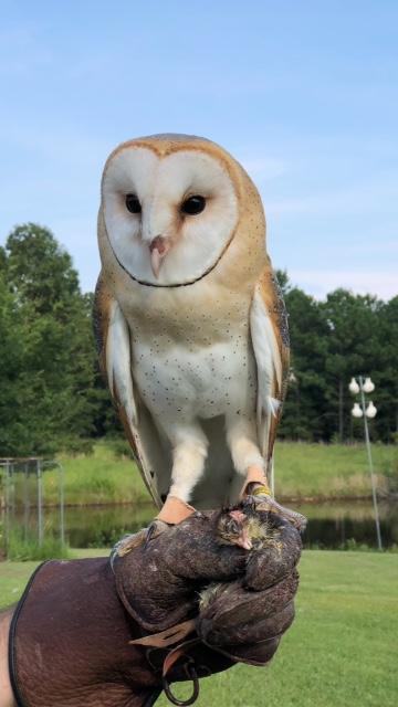 Owlex