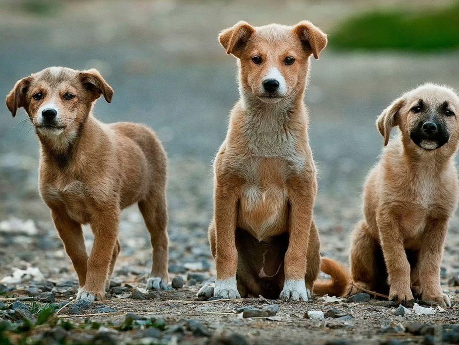 dogs-friends