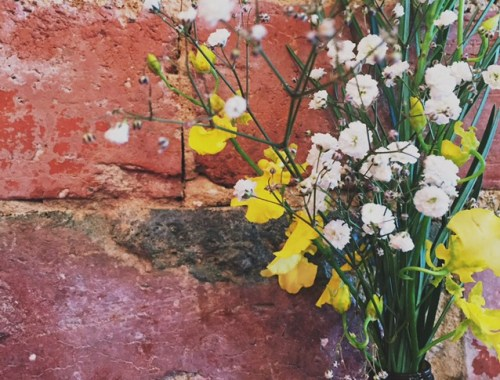 Flowers and Brick Wall - Ascot Vale, VIC