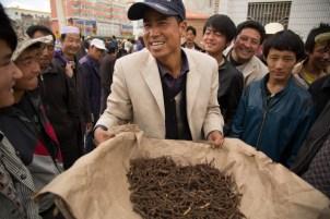 Caterpilar Fungus, Hezuo, Gansu