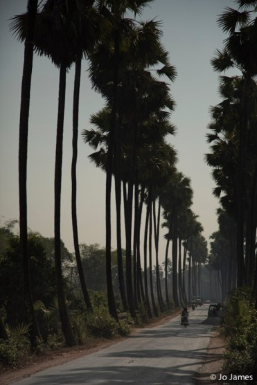 Toddy Palms