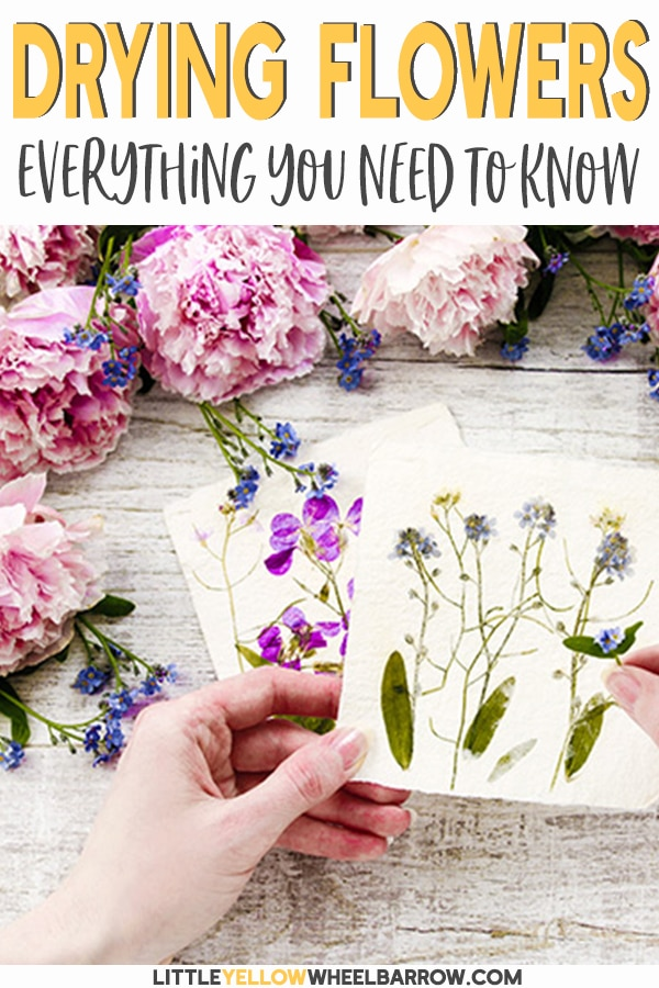 We tested all the flower drying methods and came up with the best ways to create vibrant, beautiful paperlike flowers.   If you ever wanted to learn how to dry flowers but didn't know where to start, we have everything you need to know. #driedflowers #flowerpreserving #craftideas #diycrafts #flowers #flowergarden