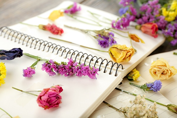 pressing flowers in a water colour notebook
