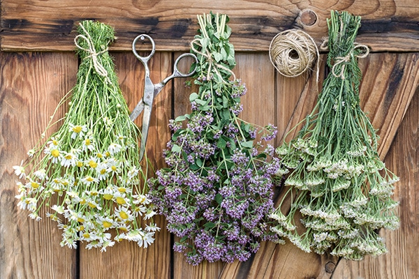 Three bundles of flowers hanging in front of a rustic door to air dry