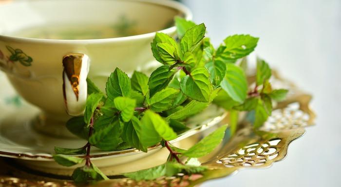 Le thé à la menthe est apprécié été comme hiver
