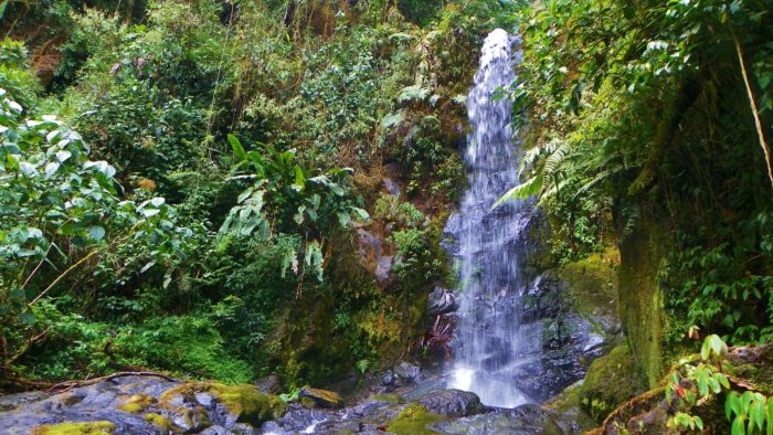 Beautiful Places In The World — La Amistad International Park