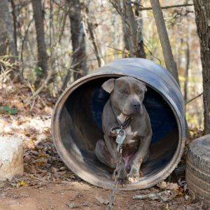 Dog in barrel