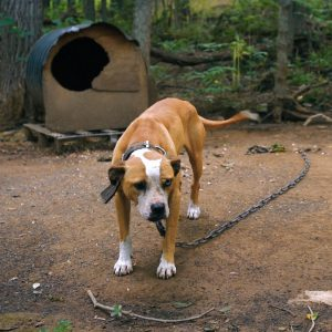 Dog saved from dogfighting operation