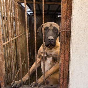 Dog on a dog meat farm